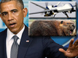 Obama Deploys Drones, Beavers To Protect Iraqi Dam